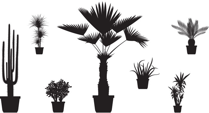 exotic_plants