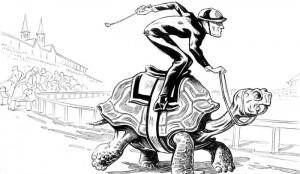 tortoise_350dpi